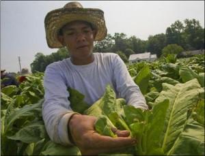 tobaccoworker